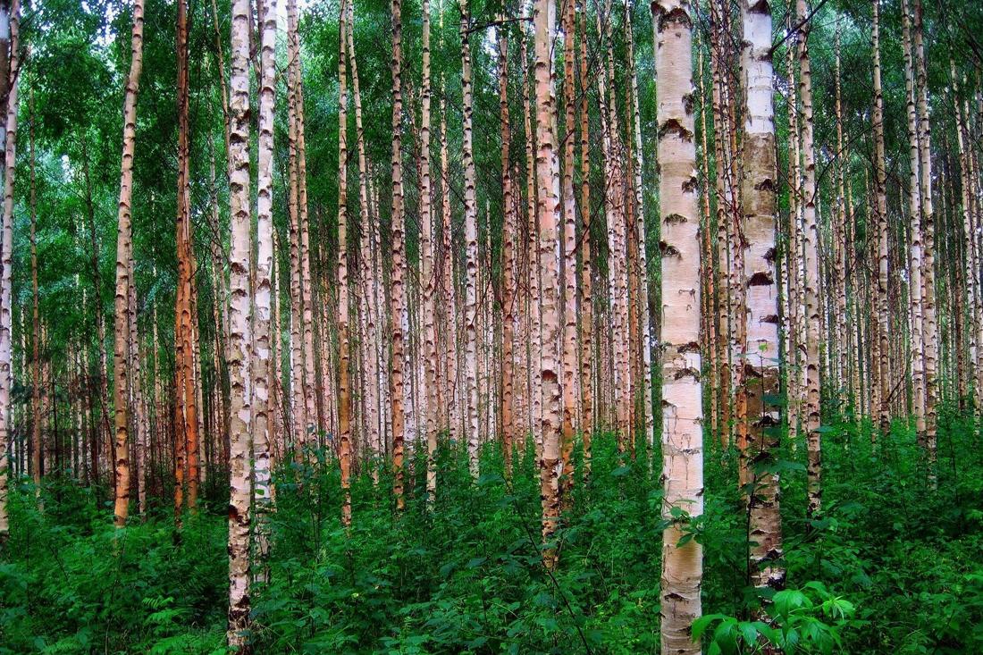 Reisebegleitung Finnland